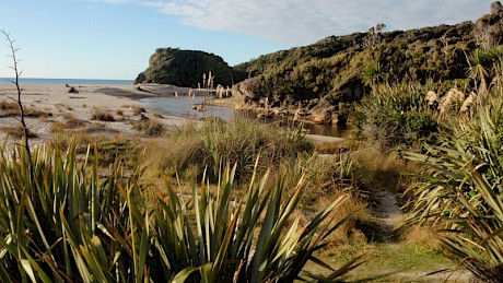 Ship Creek South Westland has some of the best remaining backdune plant communities in NZ. Photo: D. Bergin