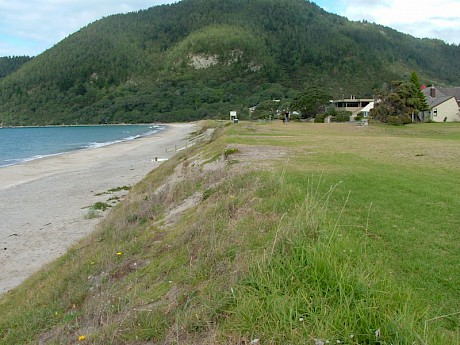 Grass and clay soils were removed from Pauanui Beach and a more natural dune shape created before planting. Photo: Coastline Consultants