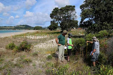 The Step-Point Method under development and refinement at the transition between the ground cover zone and the shrub zone on a backdune, Cooks Beach, Coromandel.