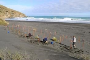 Establishment of the fertiliser trials as part of the Difficult Sites project in collaboration with the Waikato Regional Council and landowners on the Nukuhakari Station dunes.