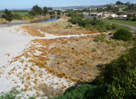 Example of the pocket beach restoration at Brighton, south of Otago Peninsula