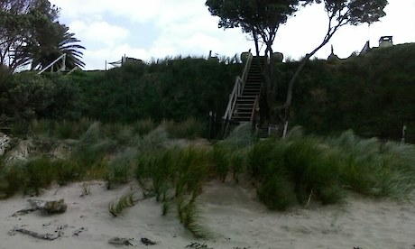 Example of recent Wainui Beach dunes restoration progress – informed by technical advice in 2017/18 for spinifex and pingao plantings on flat sand at base of dunes face, and of wiwi and NZ spinach on dunes face that was initiated by a Wairere Rd beachfront property owner (who also is a GDC staff member) inspired by dune restoration progress further north on the beach.