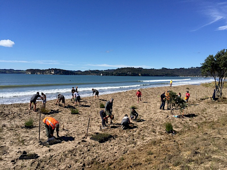 The local Buffalo Beach Coastcare group and staff from the Waikato Regional Council and Thames Coromandel District Council planting native foredune seedlings at Whitianga, Coromandel Peninsula, to compare koi carp fertiliser with the standard use of commercial slow release fertiliser tablets