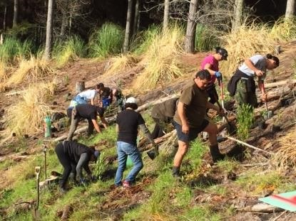 Planting of plots during community planting day Kawhia Forest, Waikato