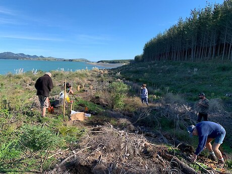 Planting out the trials - Takapuwahia trial site, Kawhia Harbour